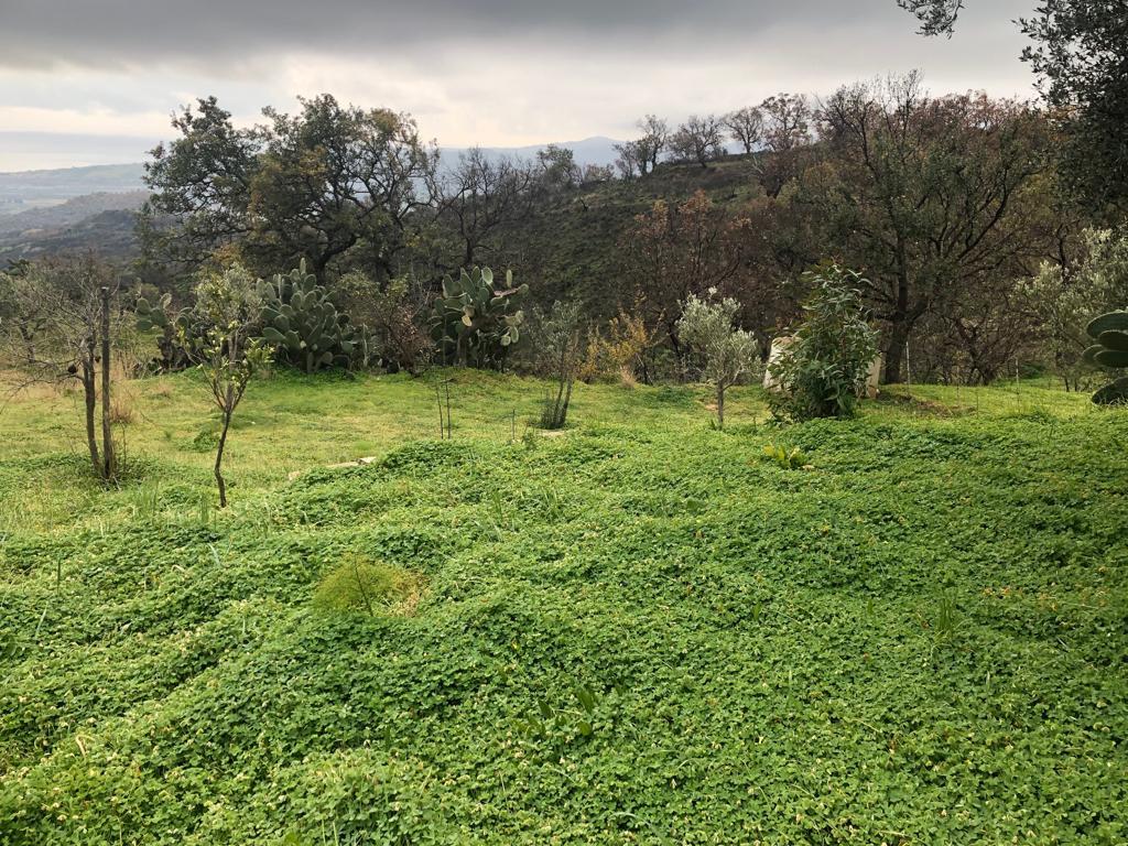 Terreno Agricolo in C. da Pirarelli