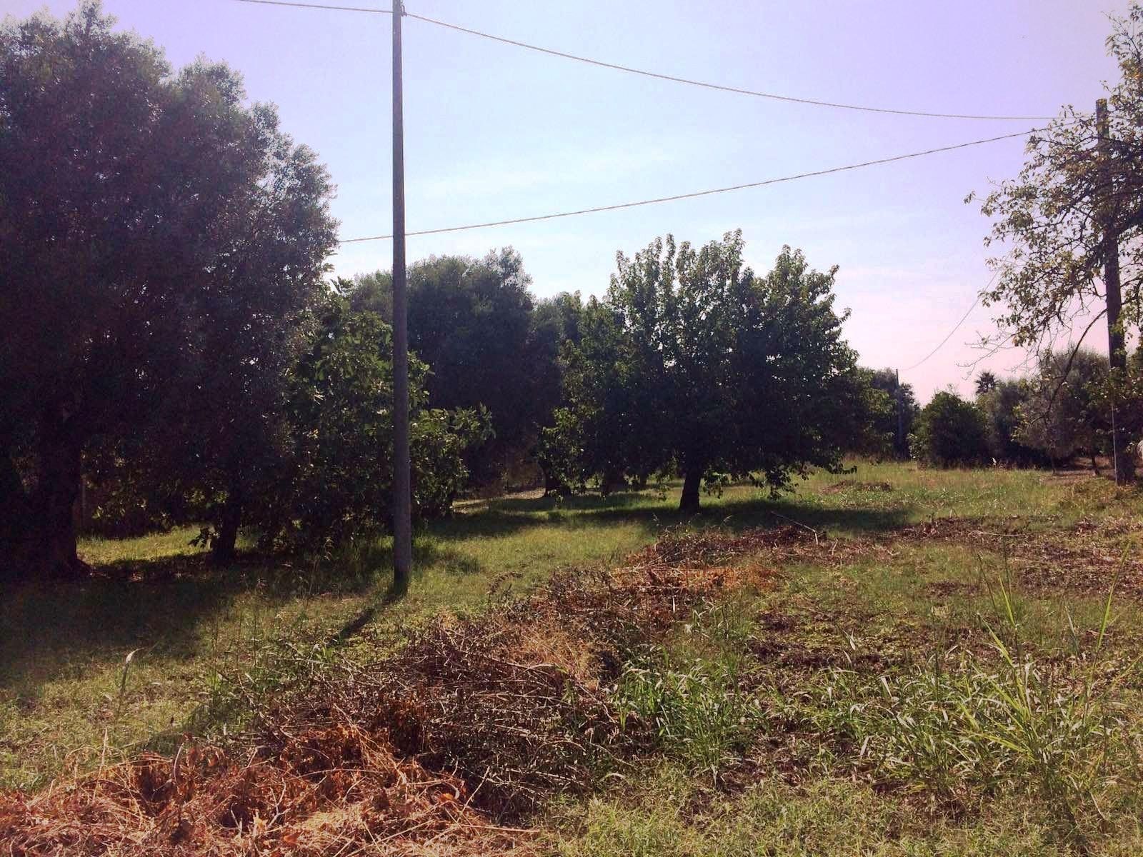 Terreno Agricolo in C. da Frascillo