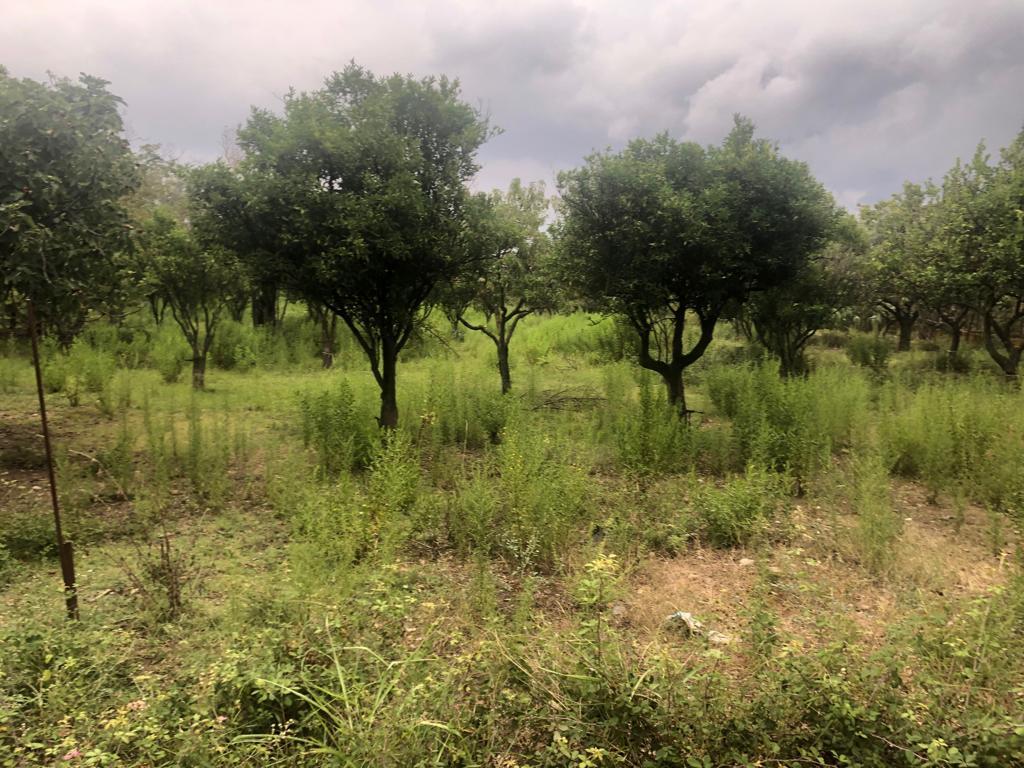 Terreno Agricolo/Edificabile in C.da Belloro