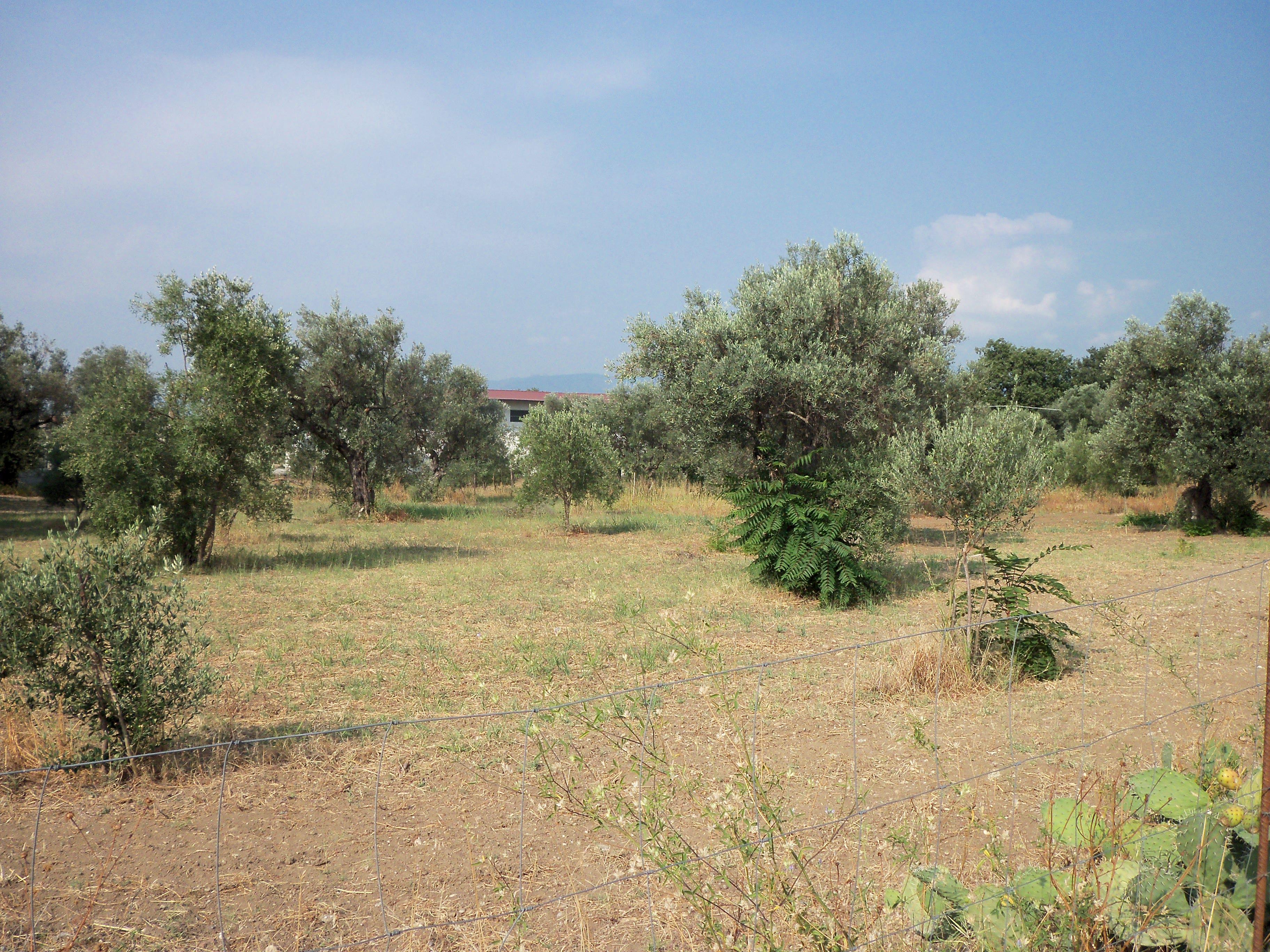Terreno agricolo alla C.da Ficarelli