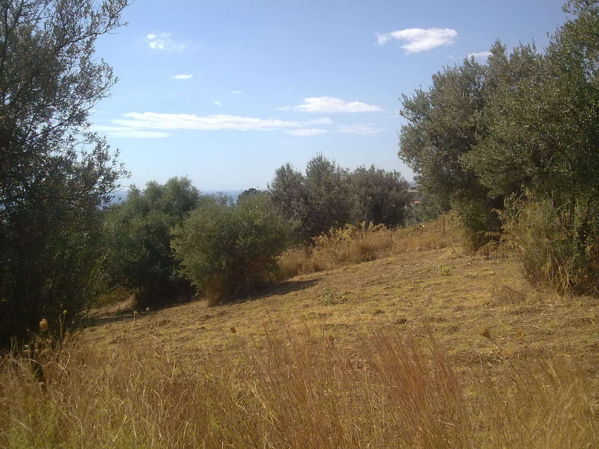 Terreno Edificabile in Contrada Pozzo